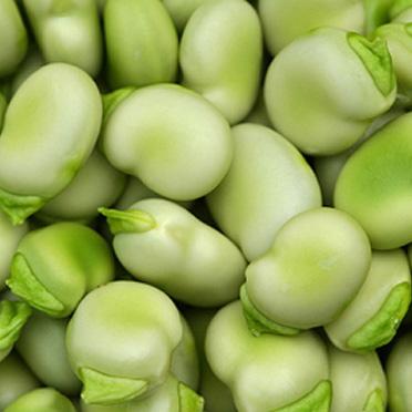 vrucht groenten