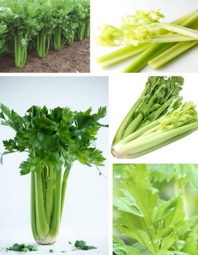 Celery website